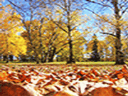 Crunchy Leaves in Fall Jigsaw Puzzle