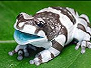 Blue Mouthed frog slide puzzle