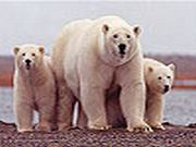 White bears family slide puzzle